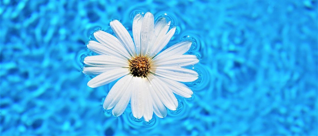 Květina v bazénu