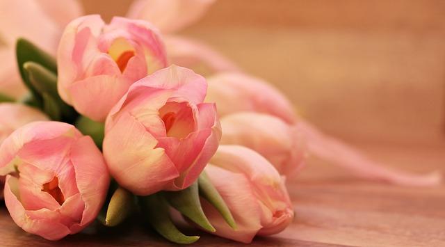 květy tulipánů